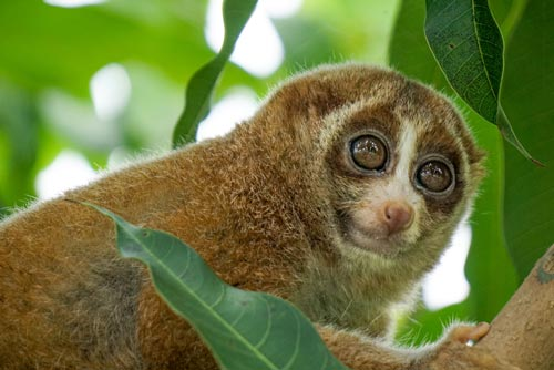 Slowloris DDoS Attack